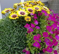 zelfgemaakte pot met planten